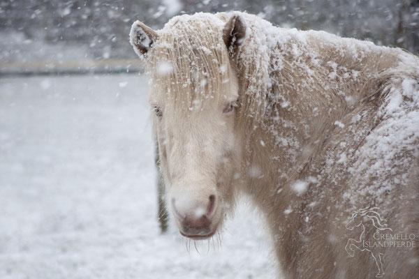 Februar 2016 - Kelda im Schnee