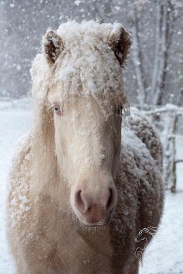 Dezember 2015 - Fräulein Fortunas Gespür für Schnee