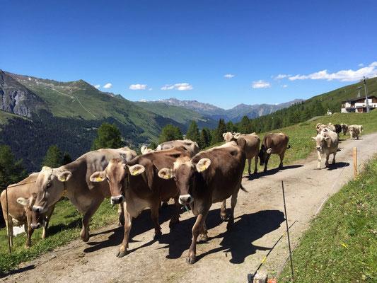 Unsere Tiere auf der Alp