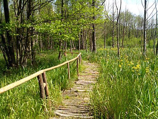 Wanderpfad durch den kleinen Naturpark Slamener Kuthen