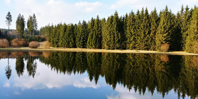 Schwarzer Teich Langenbacher Forst