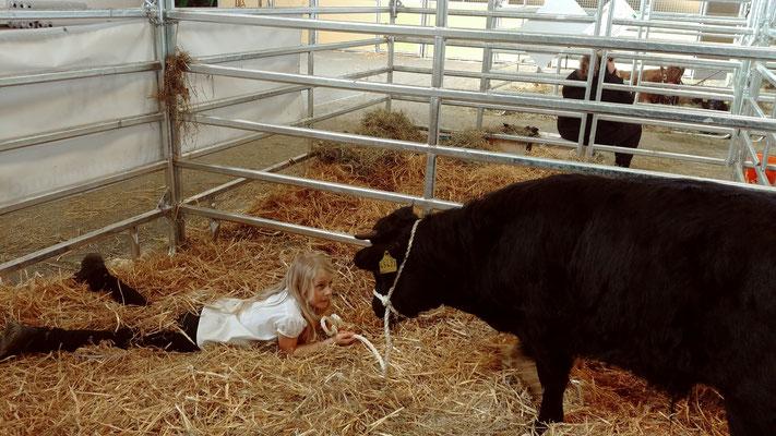 ...wie zam die Rinder nach kurzer Zeit wurden
