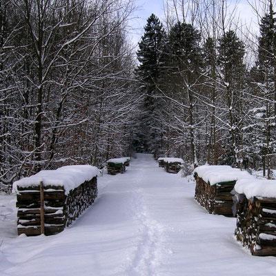 Winterwanderungen im Mittlland