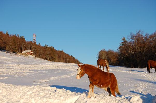 Skifahren Grenchenberg