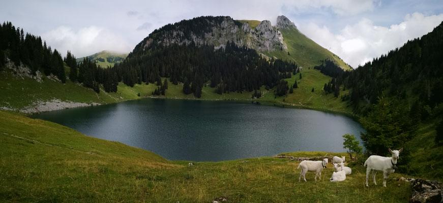 Ihr Aussichtsberg Berner Oberland