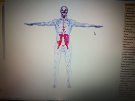費用 承諾 解剖