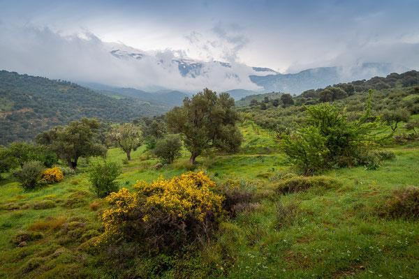 Landschaft nördl. von Agia Galini