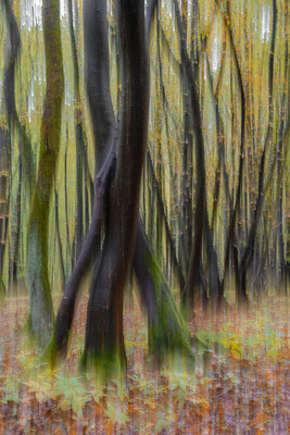 Niederwald im Herbst