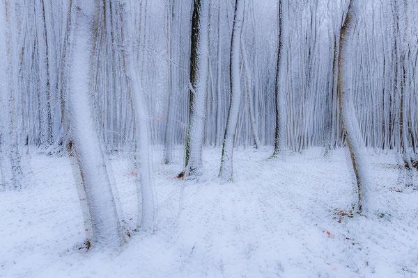 Niederwald im Winter