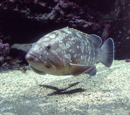 L'aquarium de Banyuls : Banyuls sur mer à 30 mn.