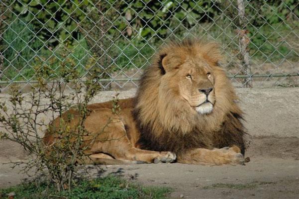 Parc animalier de Casteil : Casteil à 1 h 30 mn.