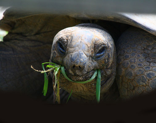 La Vallée des tortues: Sorède à 10mn.
