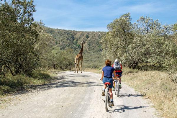 Cycling among the giraffes