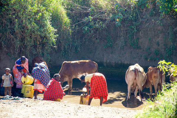 Due to the dryness people have to share water holes with livestock.