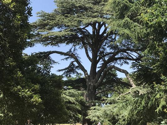 Osborne House Park