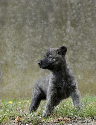 """puppie bruin mocht voor de generale repetitie voor de fotoshoot """"negen op een rij"""""""