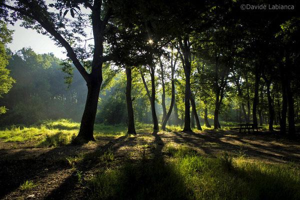 Il bosco di Foglino