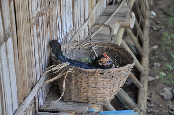 Huhn im Korb