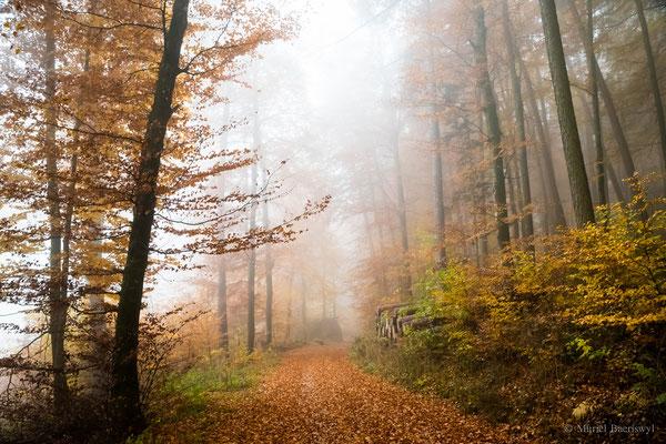 Nebelstimmung in Habstetten