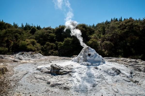 Lady Knox Geysir, Wai-O-Tapu Thermal Wonderland