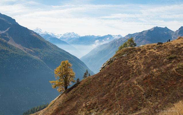 Lötschentaler Panoramaweg: Ausblick ins Tal