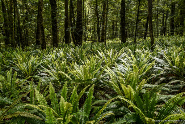 Waldstück auf dem berühmten Kepler Track