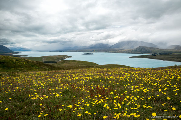 Sicht auf den Lake Tekapo