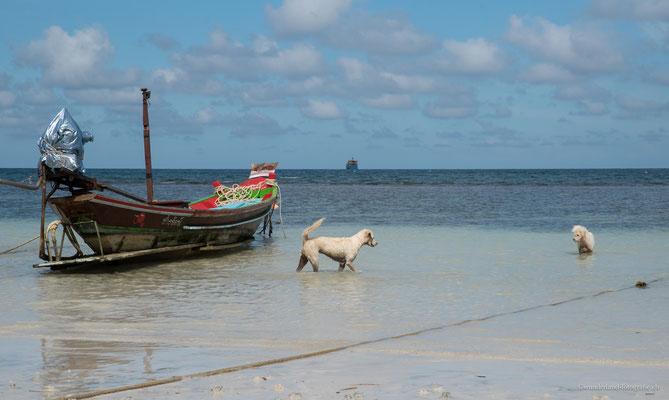 Hunde gibt es sehr viele an den Stränden von Thailand....