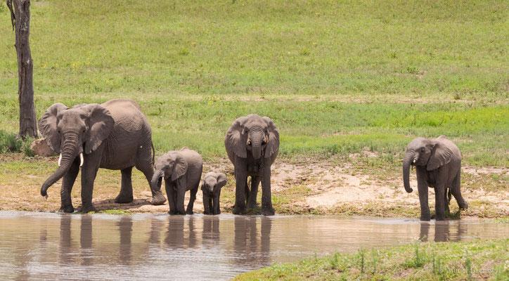 Elefantenfamilie in Südafrika