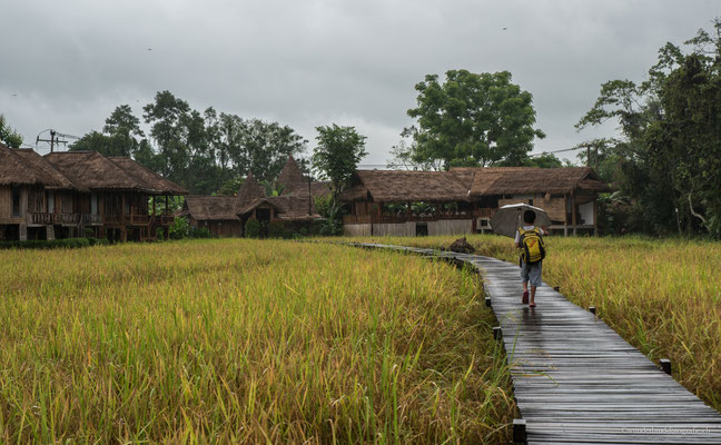 Reisfeld in Vang Vieng