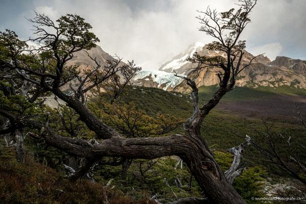 Wanderung zur Laguna de los Tres, El Chaltén - Glaciar Piedras Blancas