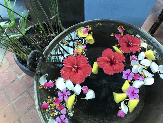 Blumen und tropische Pflanzen gibt es überall.