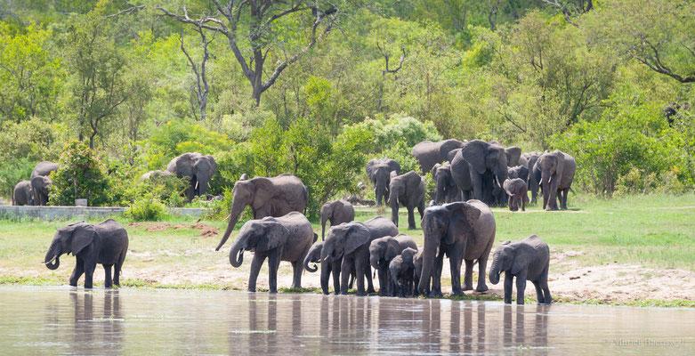 Elefantenherde am Wasserloch in Südafrika