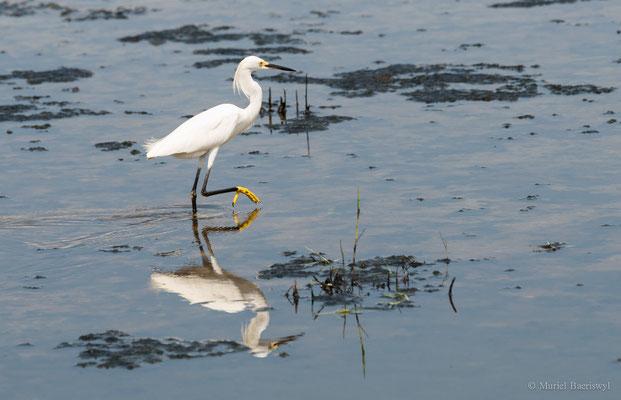 Wasservogel in Kolumbien