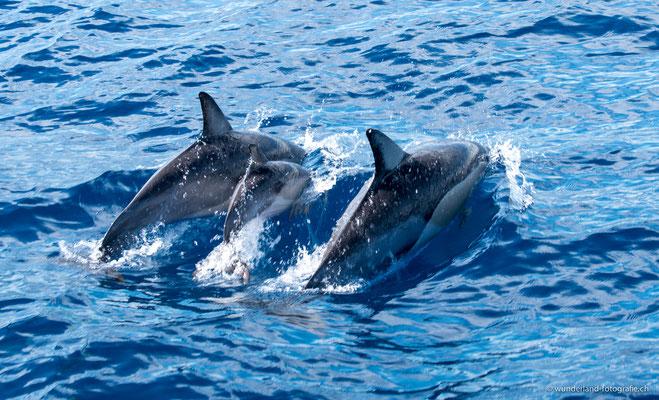 Delfine in Tauranga