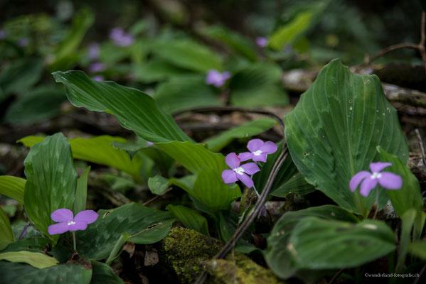 Blumenwelt im Dschungel