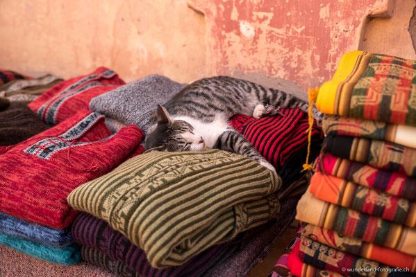 Katze in Purmamarca