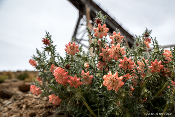 La Polvorilla - Viadukt auf 4220 Meter ü. M. (Tren a las Nubes)