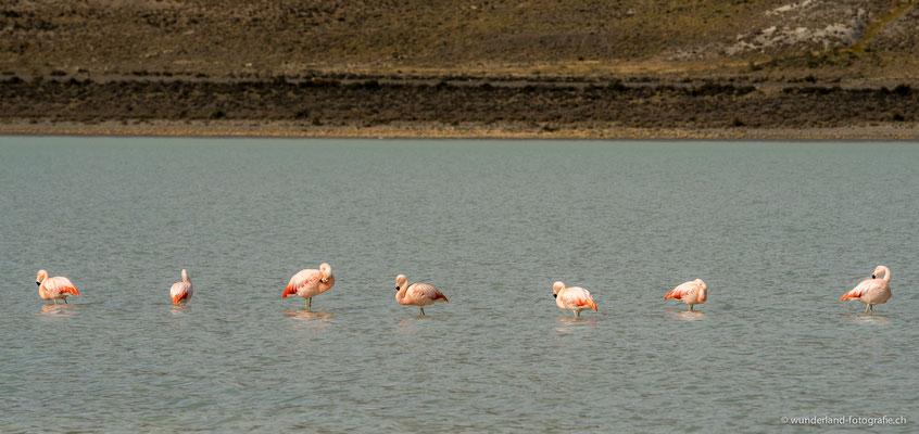 Flamingos in Torres del Paine