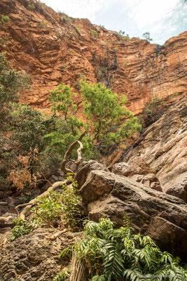 Zebadee Springs, El Questro, Gibb River Road
