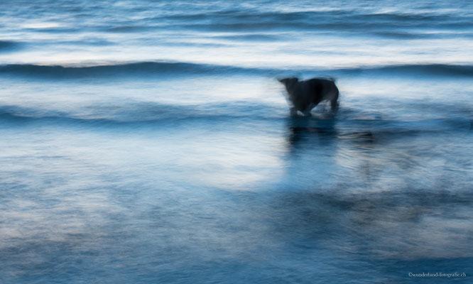 Hund beim Spielen im Wasser