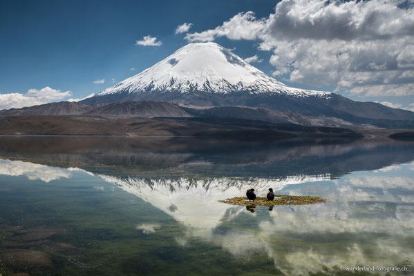 Laguna Chungara mit Blick auf den Vulkan Parinacota