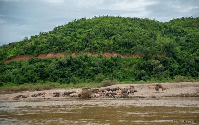 Mekong zwischen Huay Xai und Pakbeng