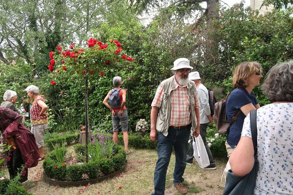 recherche d'insectes dans le patio des roses