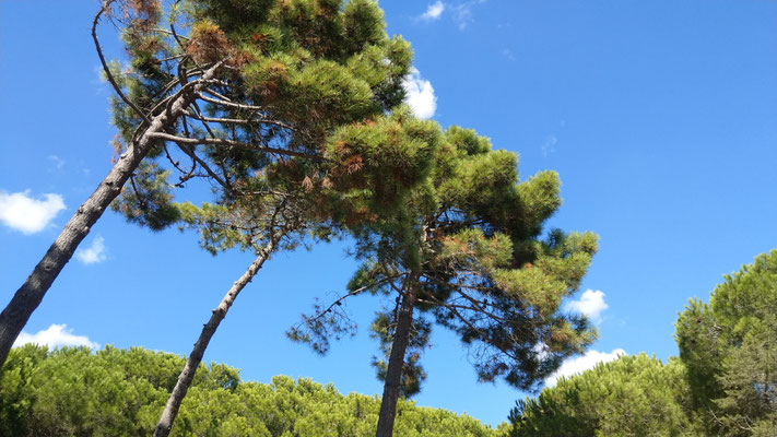 Macchia Bäume