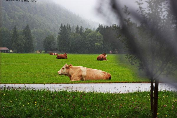 Bauernhofidyll