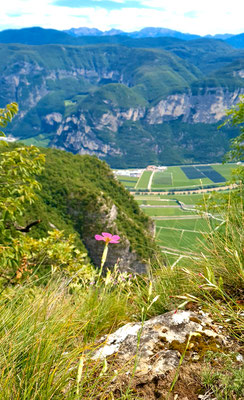 Monte di Mezzocorona