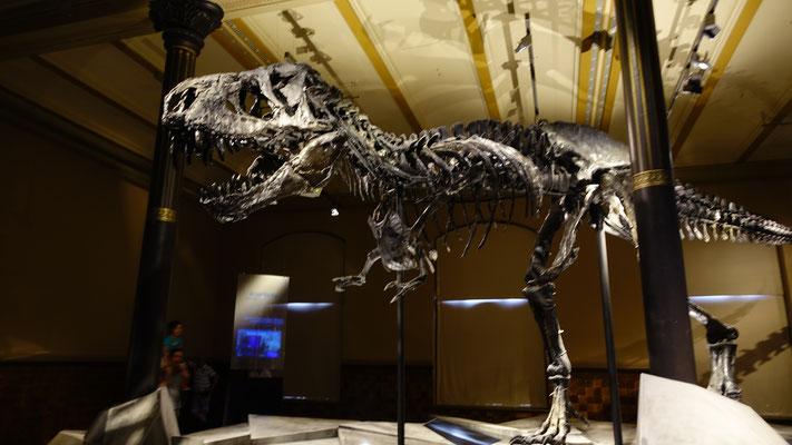 Berlin: Naturkundemuseum - T. Rex Tristan Otto