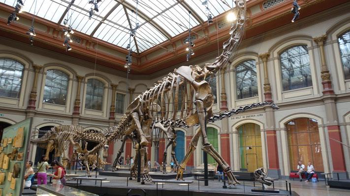 Berlin: Naturkundemuseum