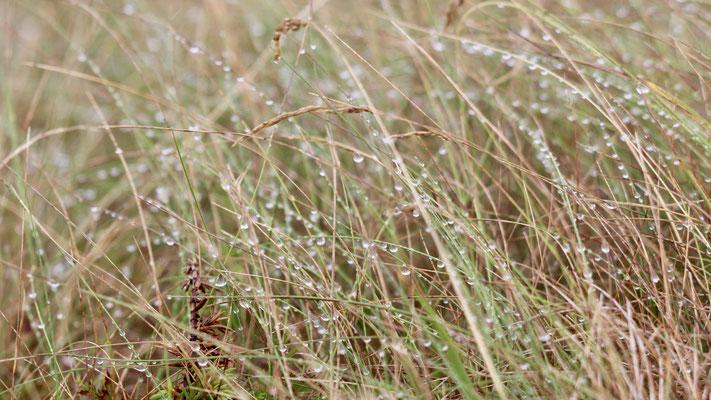 Gras auf Rott